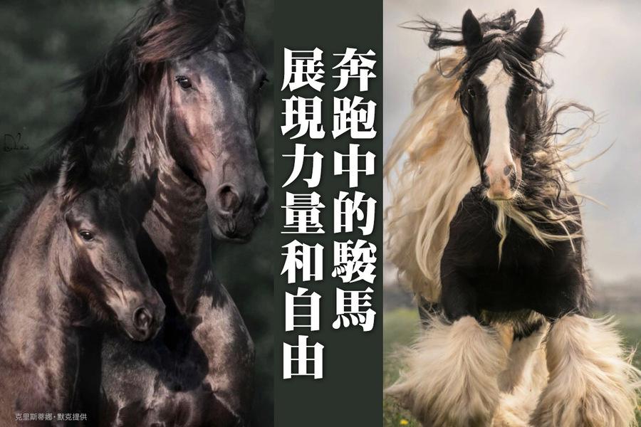奔跑中的駿馬展現力量和自由(多圖)