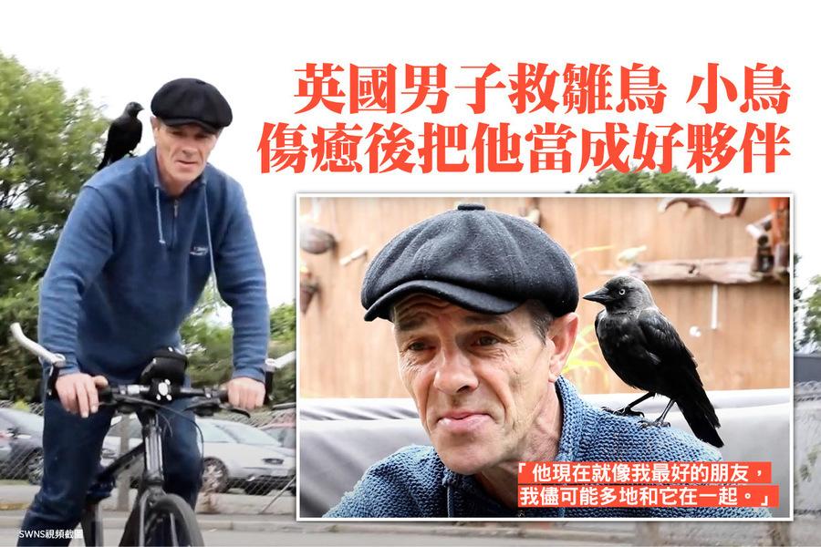 英國男子救雛鳥 小鳥傷癒後把他當成好夥伴