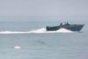 走私快艇影響海豚居住生態 對市民治安造成威脅