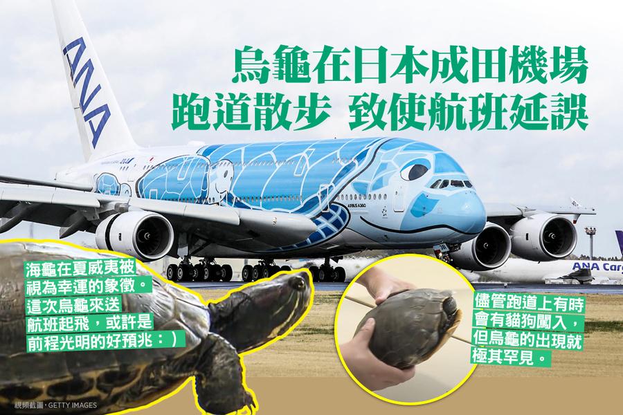 烏龜在日本成田機場跑道散步 致使航班延誤