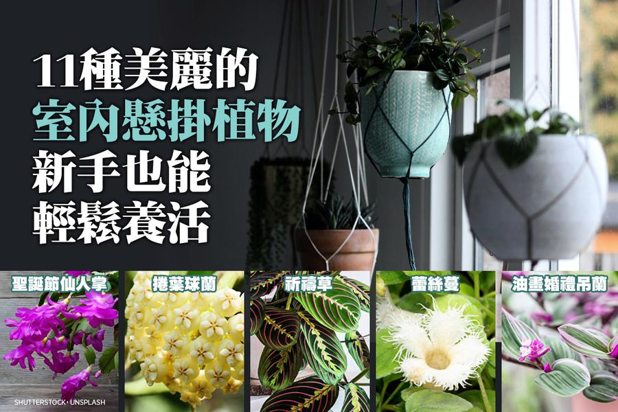 11種美麗的室內懸掛植物 新手也能輕鬆養活