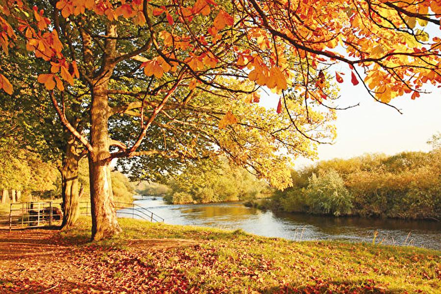 秋天最大症狀是秋燥! 中醫推薦兩白色食物