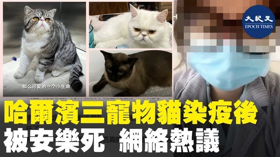 哈爾濱三寵物貓染疫後 被安樂死 網路熱議