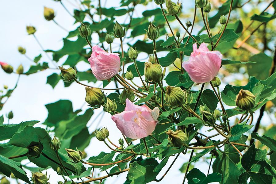 【作文學堂】看見會開花的樹