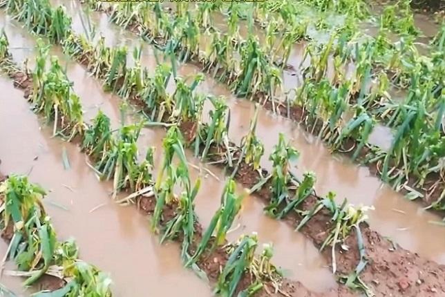 遼寧現極端天氣 冰雹如拳頭大 農損嚴重