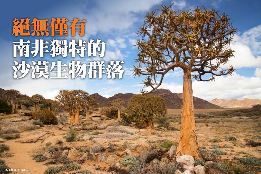 絕無僅有 南非獨特的沙漠生物群落(多圖)