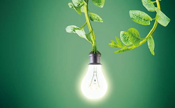 MIT新技術:植物可以充電發光