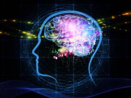 研究發現哈欠時間越長大腦越大
