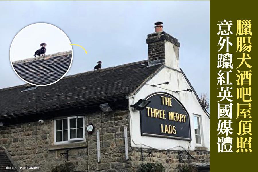 臘腸犬酒吧屋頂照 意外躥紅英國媒體