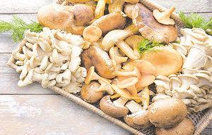 挑選合適蘑菇 做出美味菜餚