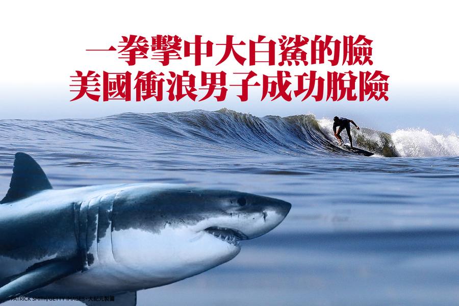 一拳擊中大白鯊的臉 美國衝浪男子成功脫險