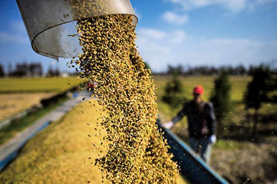 大舉進口糧食推高糧價 國際隱憂