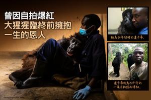 曾因自拍爆紅 大猩猩臨終前擁抱一生的恩人