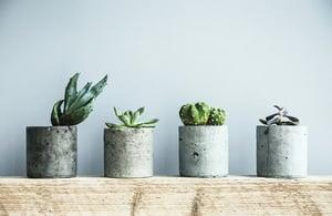 淨化室內空氣的五種植物