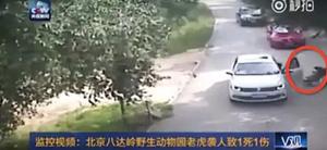 八達嶺老虎咬人事件家屬首曝車內情況