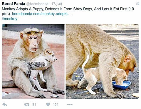 猴子收養幼犬 展現超物種愛