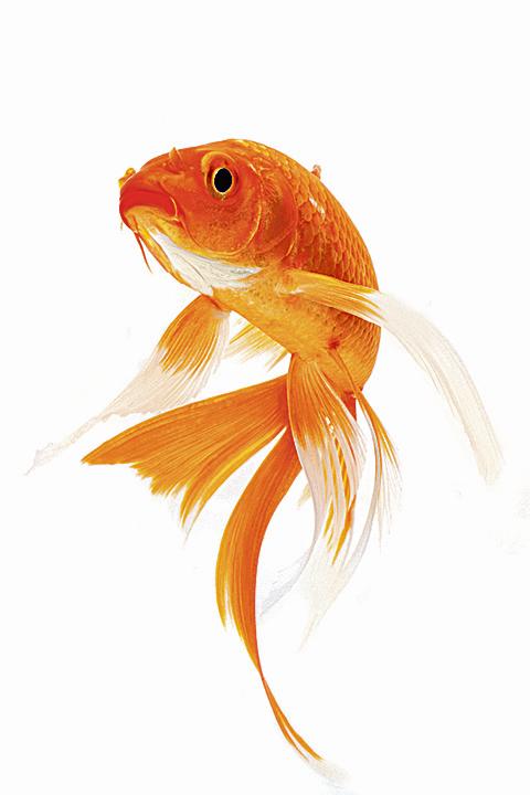 【童謠】魚兒水中游