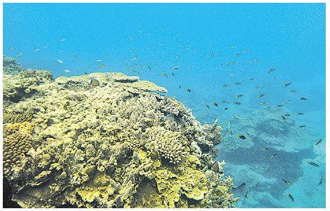 大堡礁是世界最大最長的珊瑚礁群。  (Mark Kolbe/Getty Images)