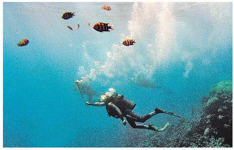 蔚藍海洋是澳洲的標記之一。  (Adam Pretty/ALLSPORT)