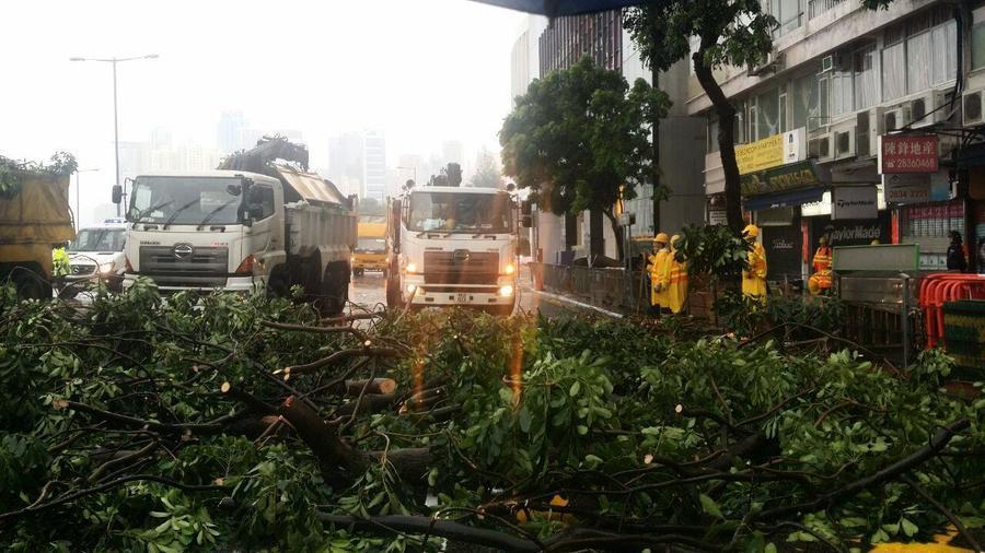 海馬襲港政府接逾150宗塌樹報告