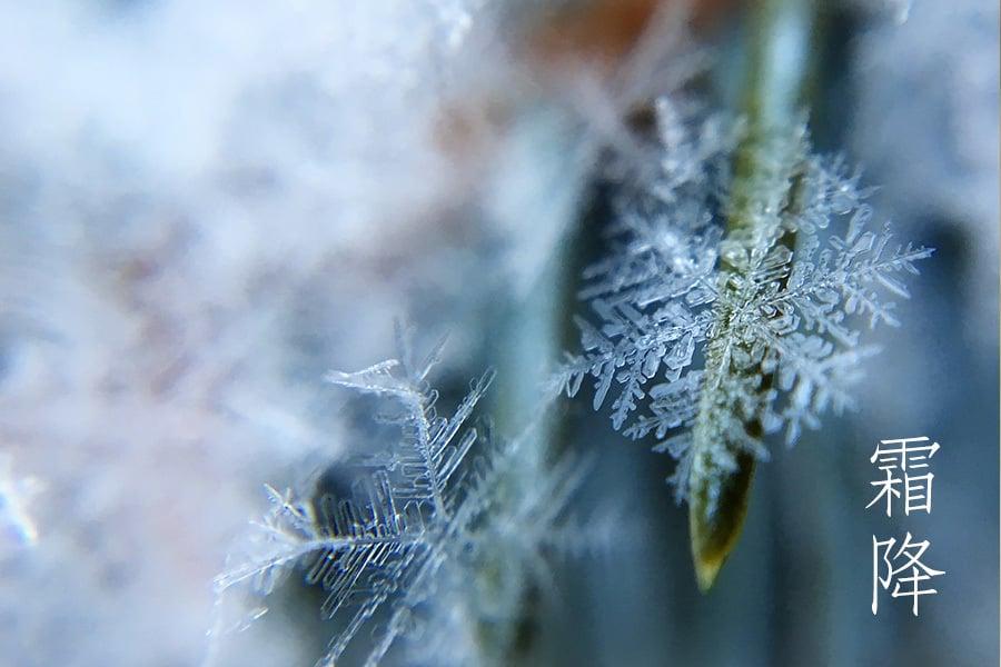 二十四節氣——霜降(Pixabay)
