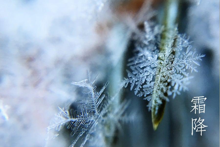 天霜降寒月彌輝——霜降節氣到