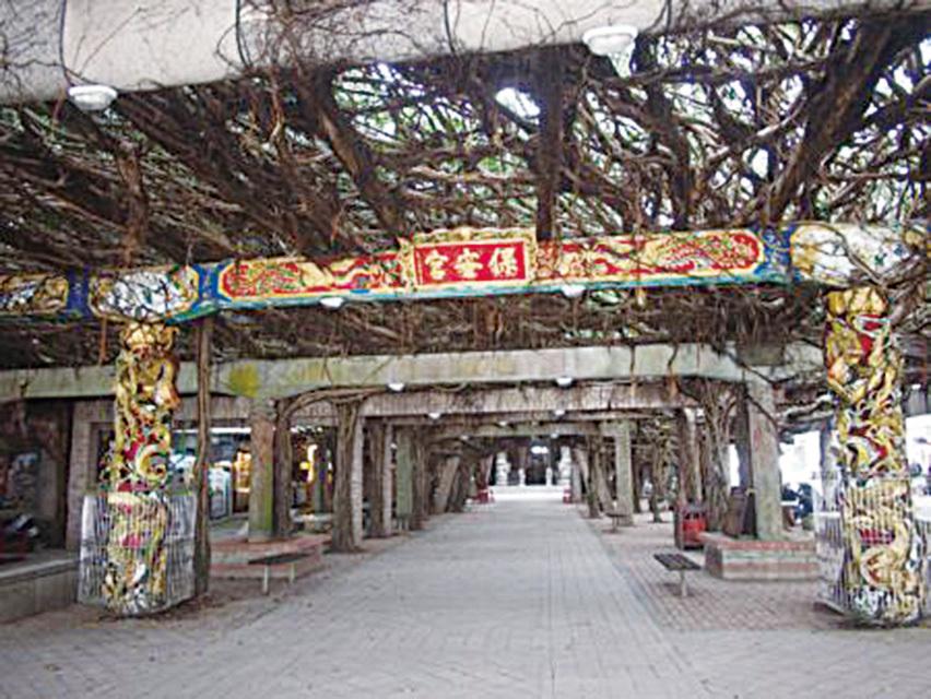 公廟上的樹棚全來自於一株古榕。