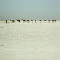 東非丹納基爾窪地