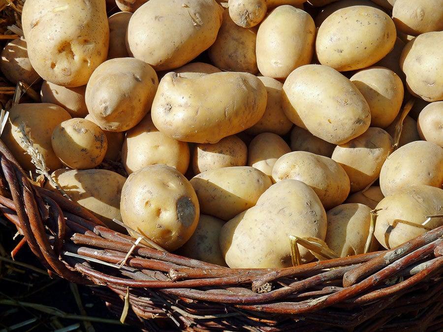 俄羅斯遠東再次禁止進口27噸中國薯仔。俄檢疫部門稱中國薯仔對人體有害。(Pixabay)