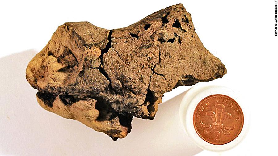 科學家首次發現恐龍大腦化石血管結構清晰可見