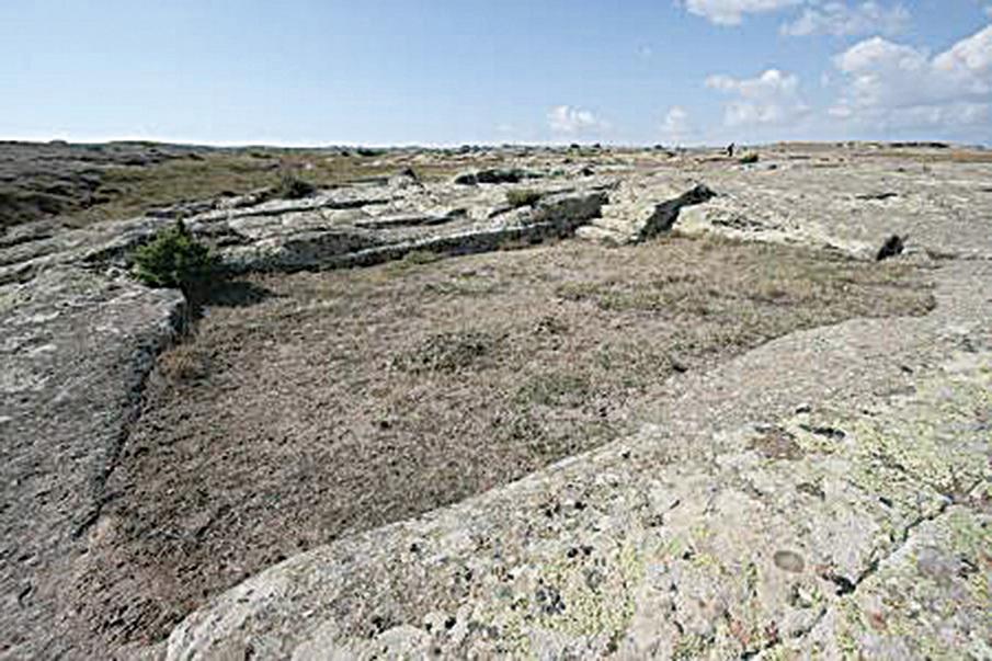 考爾泰平認為,圖中這些石化印記可能是石化車轍中間的一座建築物留下的。 (Courtesy of Dr. Alexander Koltypin)