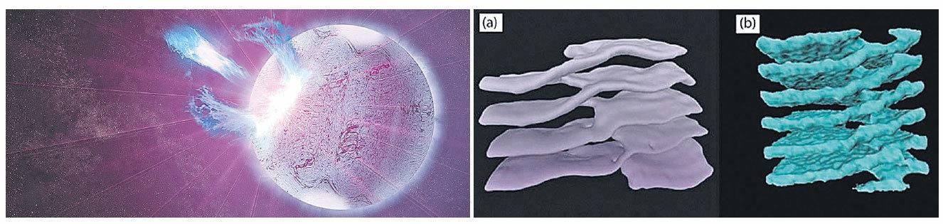 左圖:中子星模擬圖。( 公共領域)右圖:a是細胞質「寺崎斜坡」,b是中子星「核麵條」。( 官方圖片)