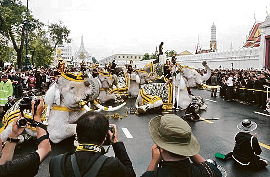 泰國國王蒲美蓬辭世近1個月,泰王生前喜愛大象,8日有大象弔祭團到大皇宮前以下跪禮哀悼泰王,場面十分感人。(中央社)