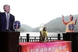 印度魚和中國猴 都預測特朗普贏得大選
