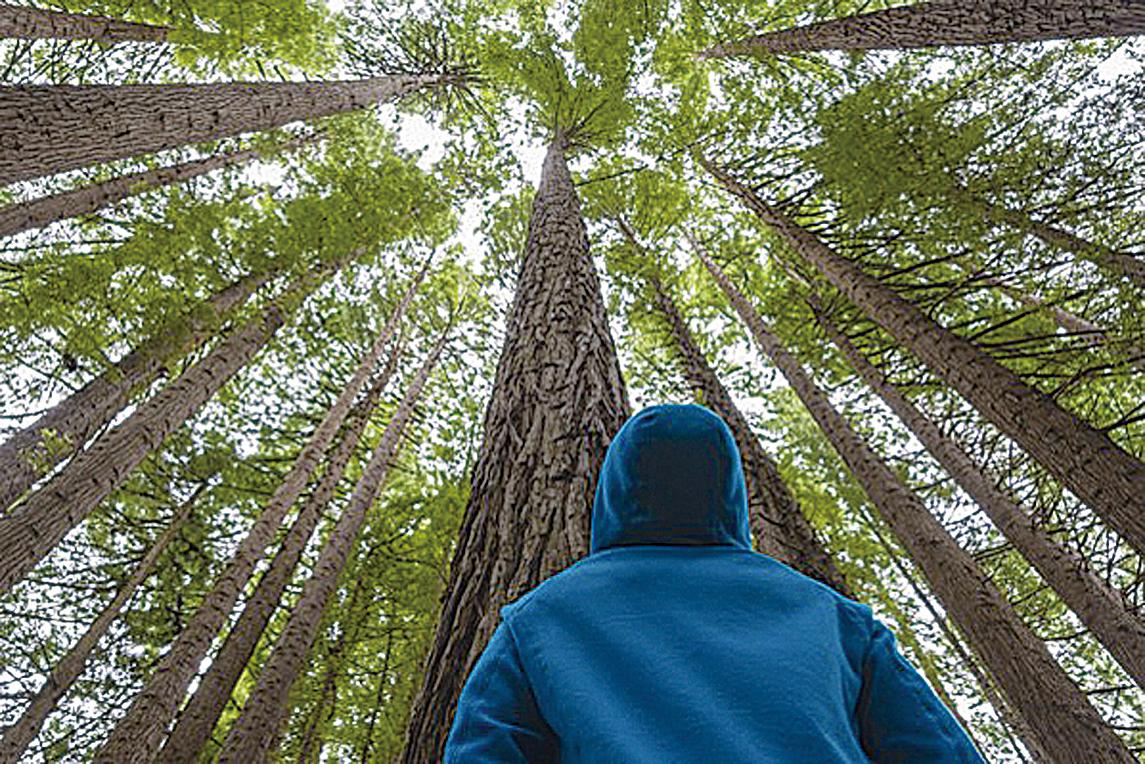 獨立的樹木有「共生網絡」。(Fotolia)