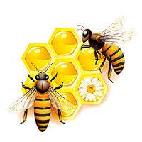 【萬物有靈】蜜蜂吃糖心情愉悅 研究發現昆蟲也有感覺
