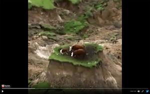 新西蘭強震山崩地裂 三牛倖存困孤島