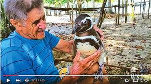 改遷徙習性企鵝黏救命恩人