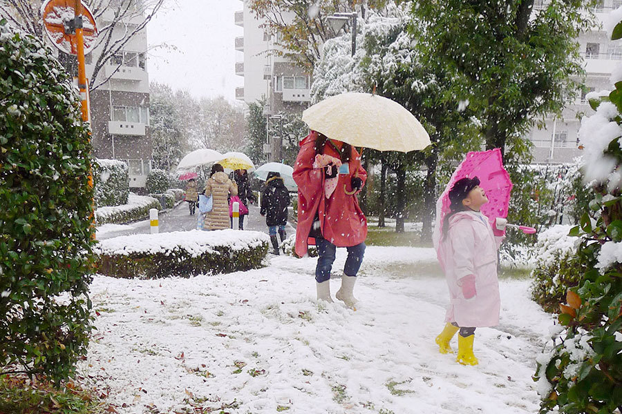 日本東京24日下起11月雪,為東京54年來首見。一名兒童上午在東京西郊的雪堆中行走。(共同社提供/中央社)