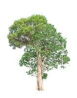 北國山中的無名樹