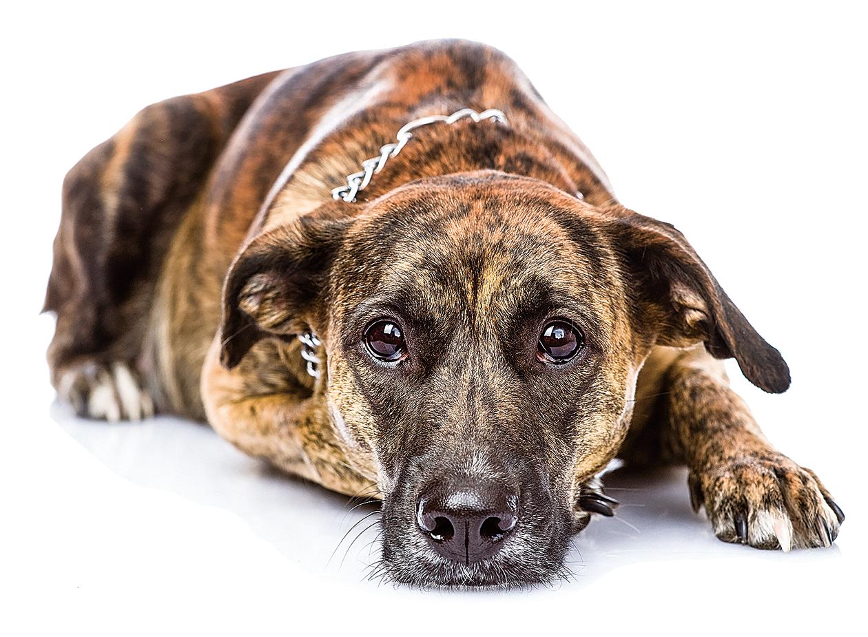 我四周瞧,把頭點點那頭需要人好好給牠洗個澡的可憐的老狗。牠褐色的長毛糾結成一團團,活像個剛拖完地的拖把。