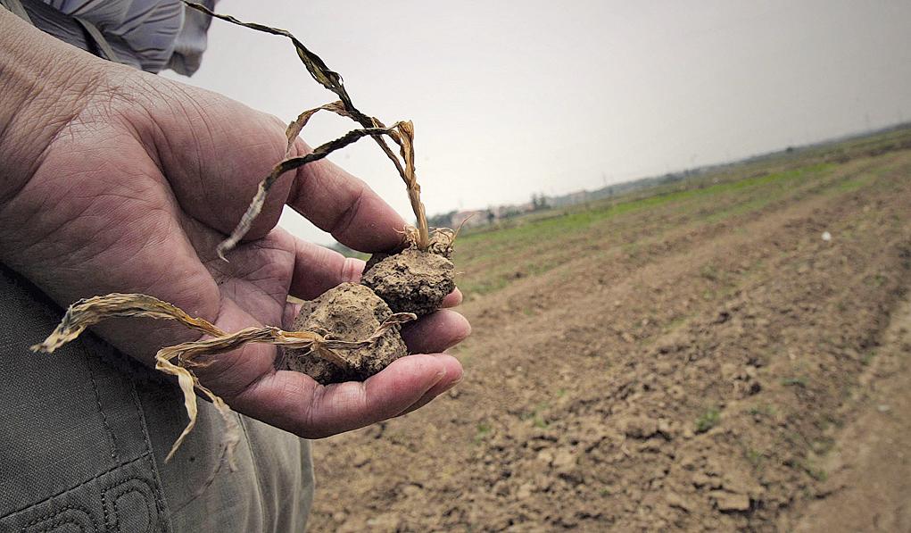 中國種糧成本高居不下 農民收益大幅下降