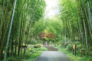 穿梭溪頭森林小徑 探尋植物名人足跡