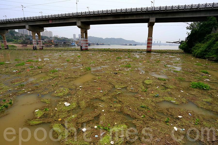 圖為2015年7月17日,長江宜昌段一級支流黃柏河水面現巨型垃圾漂浮帶,這些漂浮物將順水流至下游的葛洲壩水利樞紐。(大紀元資料室)