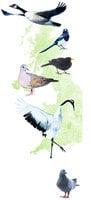 【英倫隨筆】花園小鳥