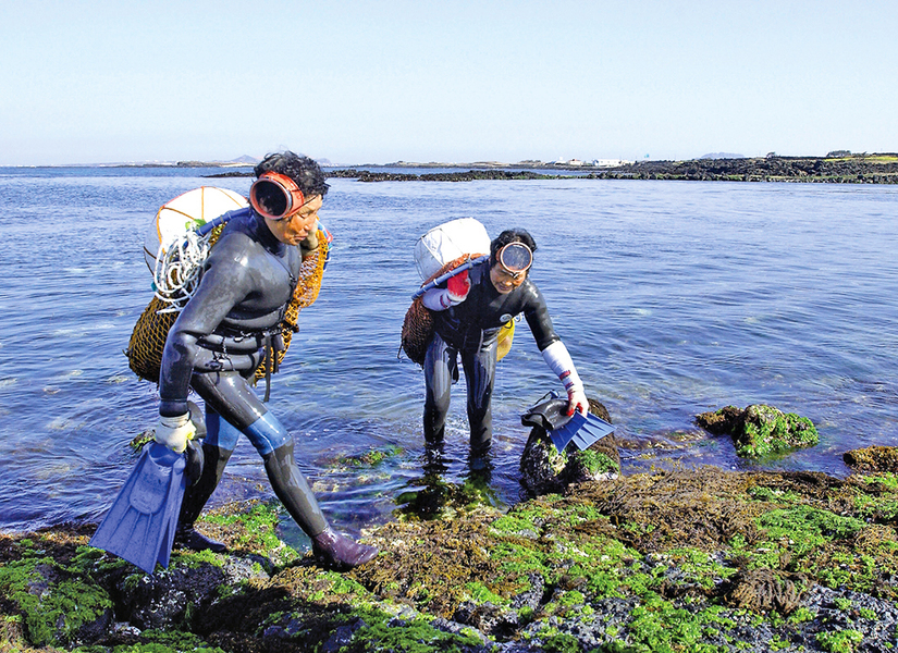 韓國濟州島海女撈捕海產養家