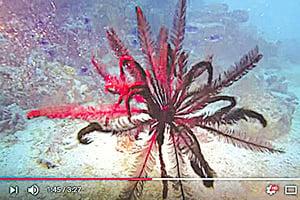 看這種海洋生物游泳 心花朵朵開