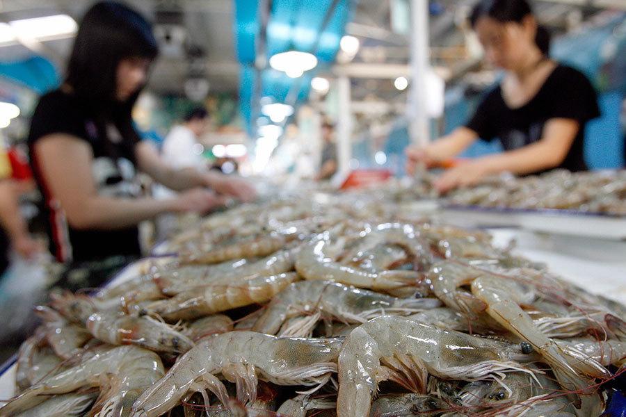中國是世界上海鮮(包括蝦)出口的第一大國,但是它有一個巨大的問題,就是抗生素使用過量,其威脅到全球安全。(TEH ENG KOON/AFP/Getty Images)