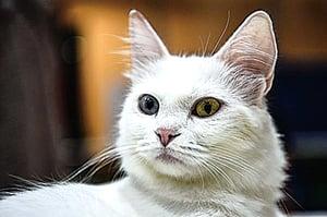 貓播散禽流感?紐約一名獸醫染病已痊癒