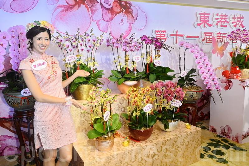 「蘭花大王」楊小龍今年引進3款來自日本的新品種蘭花,當中「皇者風範」(圖右)索價16,800元一株。(宋祥龍/大紀元)